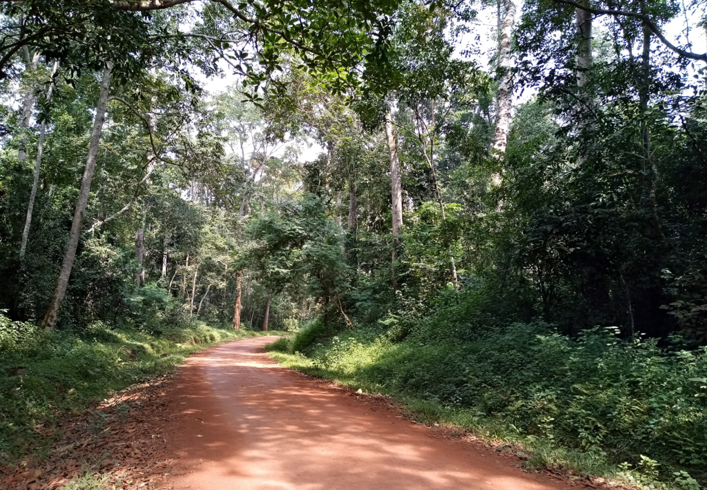 Makulungo Forest Reserve